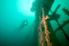 Undersea & sea mammals