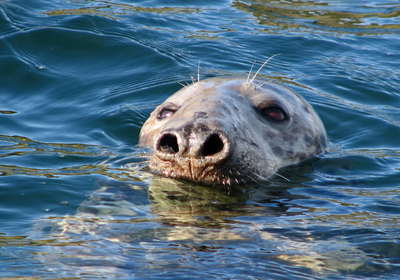 seal-sheila-saltmarsh