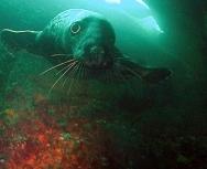 cheeky-seal-by-ekki-schepanski