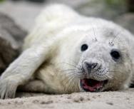 seal-pup-monachs-michael-mckee