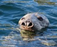 seal-sheila-saltmarsh