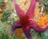 starfish - tim almond