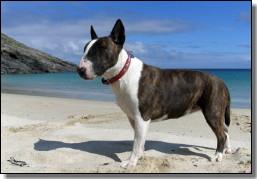 ship's dog seven on mingulay - kirsty dalby