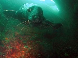 1-cheeky seal 1 by ekki schepanski