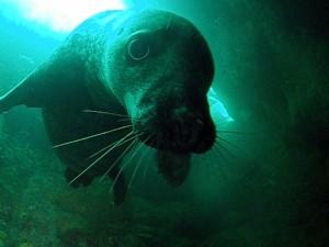 2-cheeky seal 2 by ekki schepanski