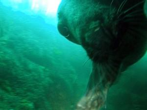 cheeky seal by ekki schepanski