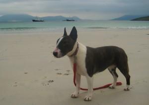 Seven, 35,000 nautical mile sea dog enjoying another beach landing