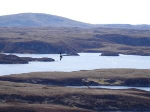15-GE + Raven Loch Eyport May 2015 (3)