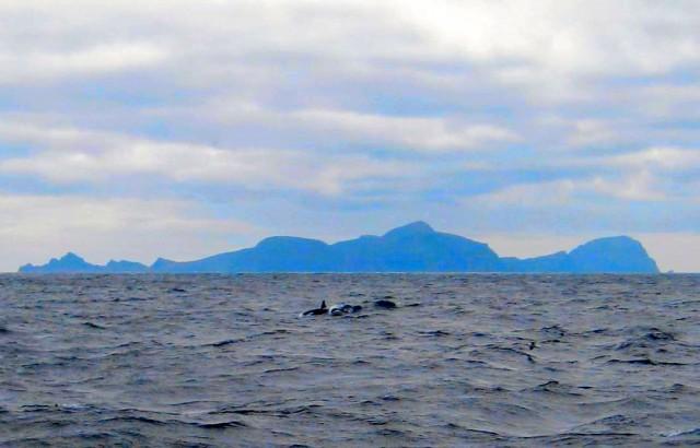 Orca by Molly Scanlon