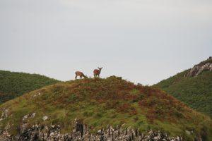 Deer at Locheport by Michelle Baron
